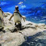 【うみがたり水族館】と【マリンピア日本海】違いは?両方行ったよ♪